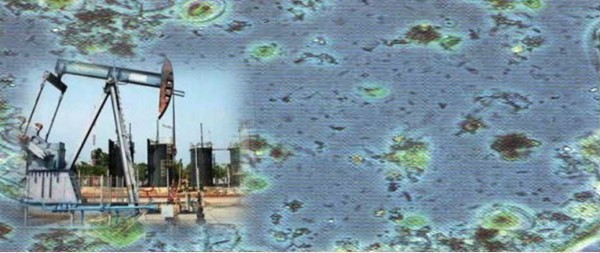 oilfield bacteria